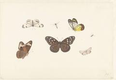 Blad met vijf vlinders en twee vliegen