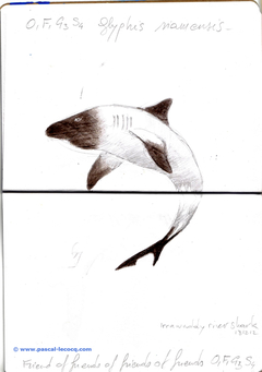 Carnet Bleu: Encyclopedia of…shark, vol.XII p24 - by Pascal