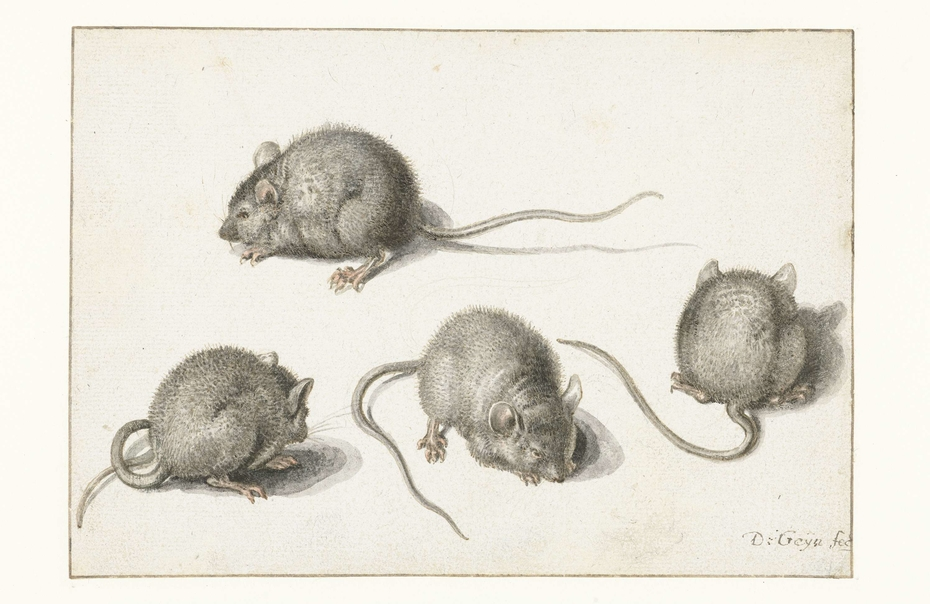 Four studies of a diseased mouse
