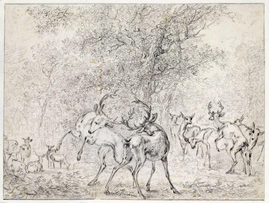 Groep herten in het bos