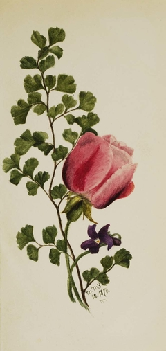 Pink Rose with Violet