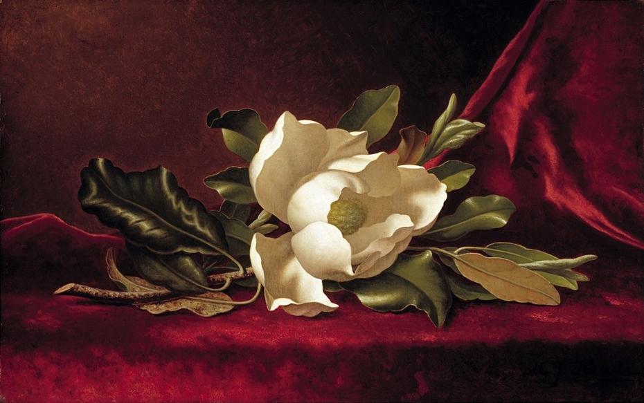 The Magnolia Blossom