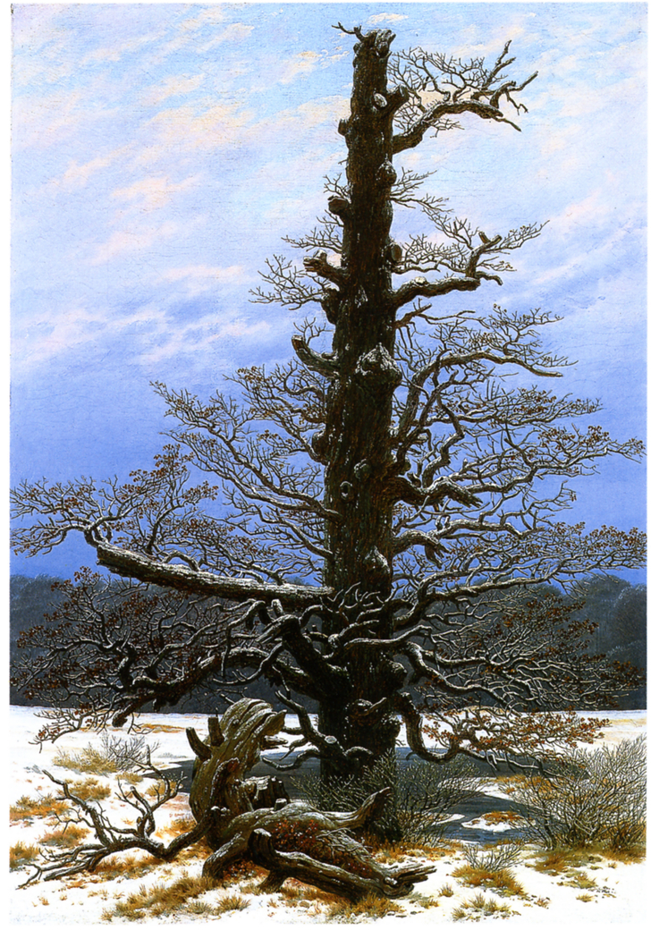 The Oaktree in the Sno
