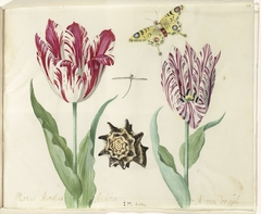 Two Tulips, a Shell, a Butterfly and a Dragonfly