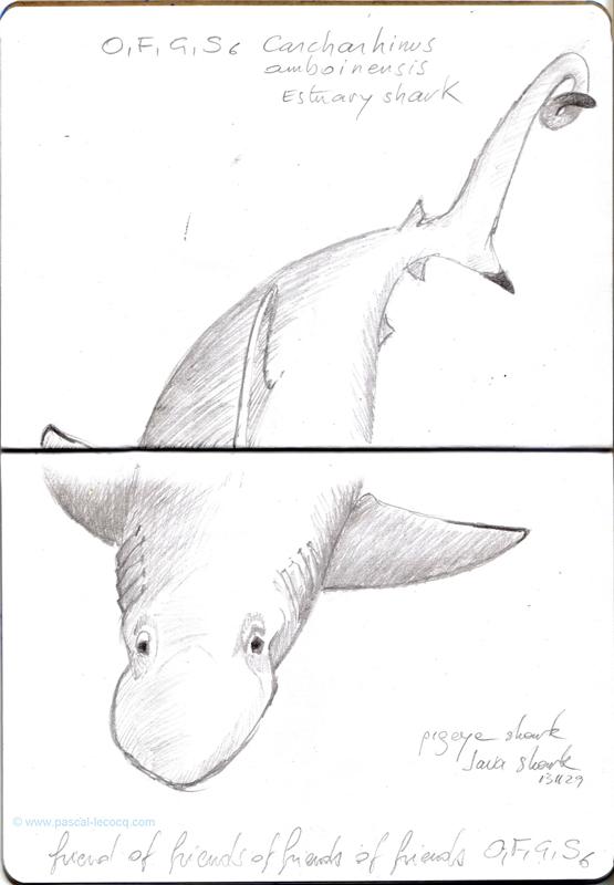 Carnet Bleu: Encyclopedia of...shark, vol.X p 18 - by Pascal