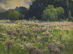 Field of Joe Pie Weeds (Pride of the Meadow)