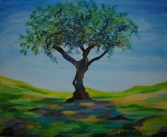 Olive tree in Kaisariani