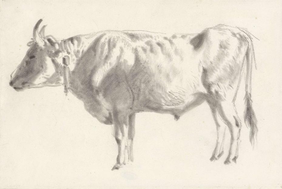Studie van een os, in profiel