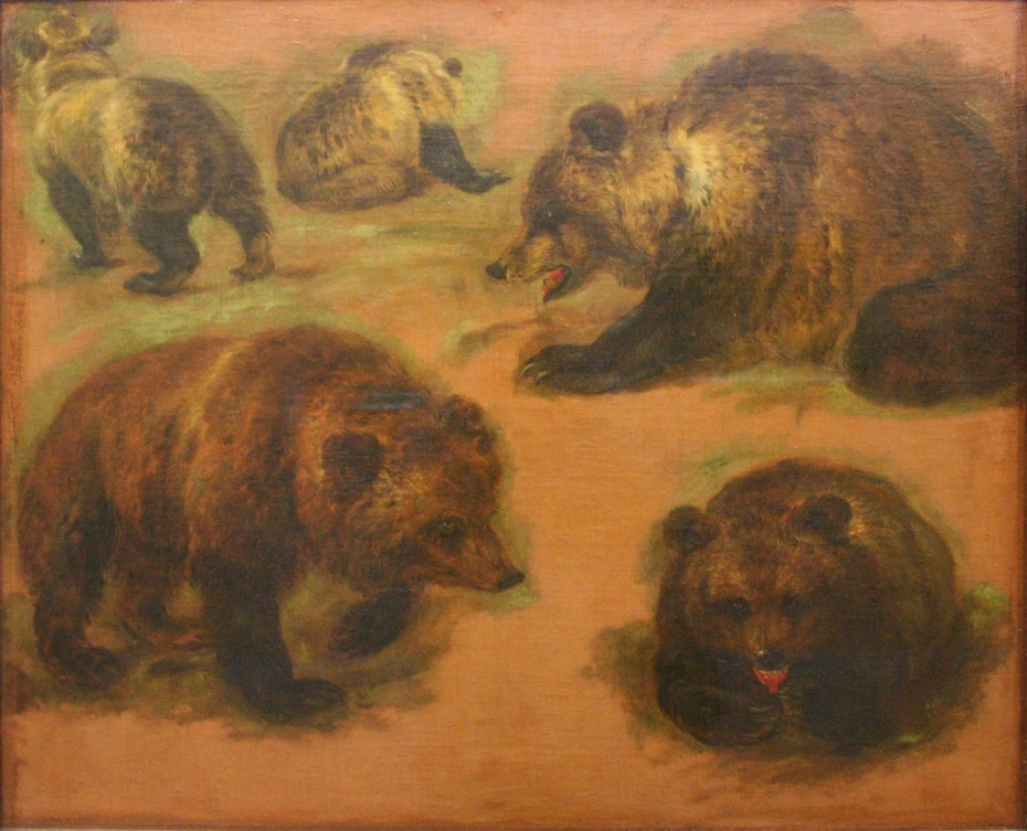 Study of a brown bear