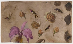 Study of Four Hummingbirds with Roses and an Orchid