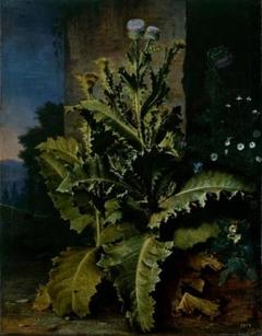 Thistles and cornflowers