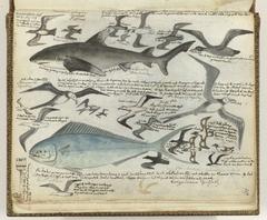 Zeevogels en zeevissen