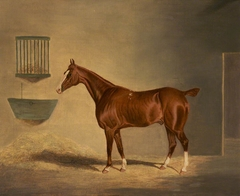 A Chestnut Horse in a Stable