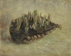 Basket of Crocus Bulbs