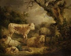 Calf and sheep