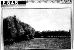 Een weide met bomen