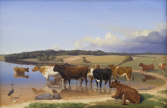 En flok kvæg har søgt kølighed i en sø på en hed sommerdag
