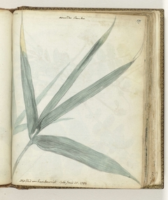 Het blad van bamboeriet