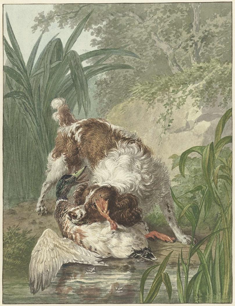 Jachthond vangt een eend