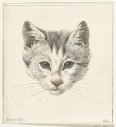 Kop van een kat, van voren gezien bij kaarslicht