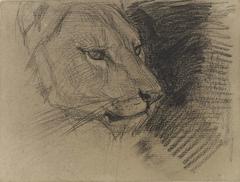 Kop van een leeuw
