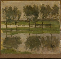 Row of eight young willows reflected in the water