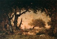 Sortie de forêt à Fontainebleau, soleil couchant