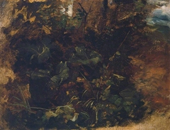 Study of Burdock and other Plants