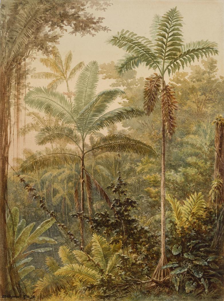 Vegetação tropical (atribuído)