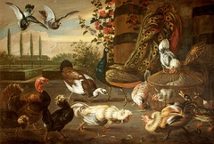 A Cockfight, with Hens, Peacock, Muscovy Duck, Turkey, and Pigeons, in a Garden Setting