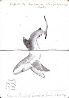 Carnet Bleu: Encyclopedia of...shark, vol.X p 18 - by Pascal
