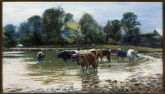 Cows wading in the river