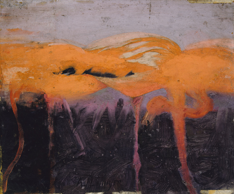 Red Flamingoes, study for book Concealing Coloration in the Animal Kingdom