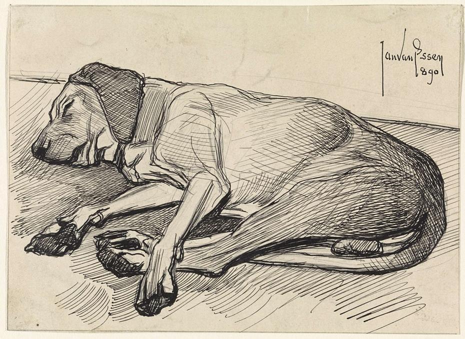 Slapende hond, naar links
