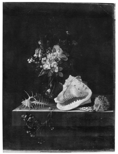 Still life with flowers, shells and a butterfly