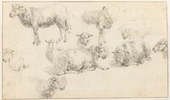 Studieblad met staande en liggende schapen