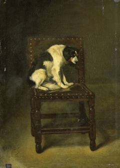 A Dog on a Chair