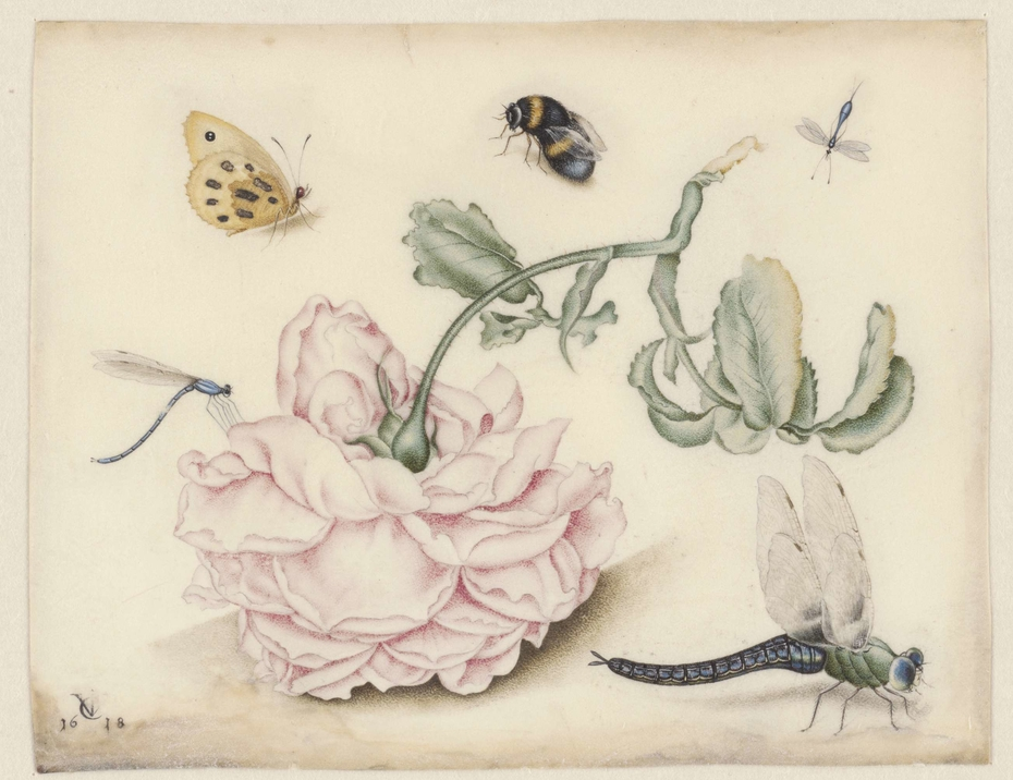 A Rose and Five Insects
