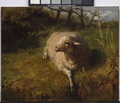 A Sheep at Rest