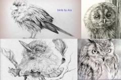 birds creations