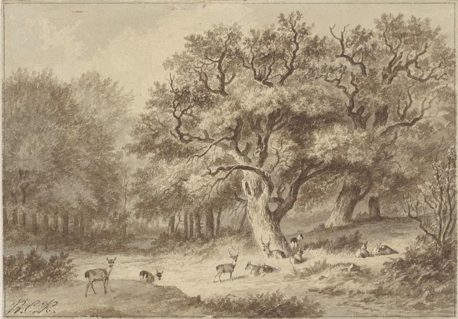 Boslandschap met herten
