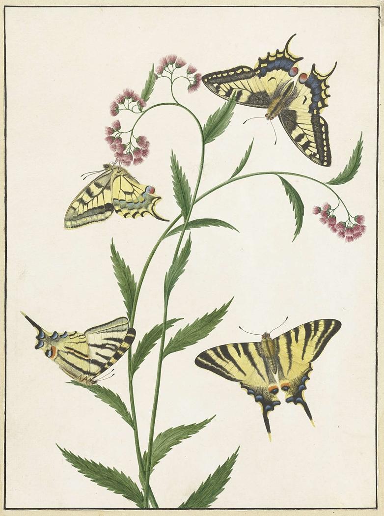 Four Butterflies on Flowers