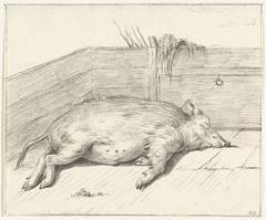 Liggend varken, in de hoek van een hok