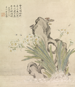 Narcissus, Rock, Bees and Linghzhi
