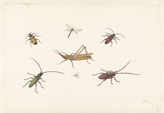 Sheet with Seven Different Insects