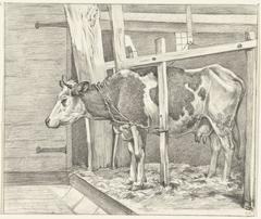 Staande koe in de stal