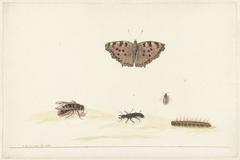 Studieblad met verschillende insecten
