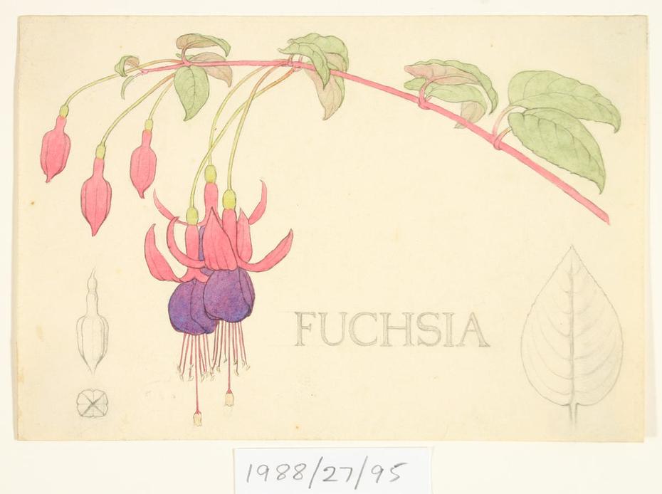 Untitled (Fuchsia)