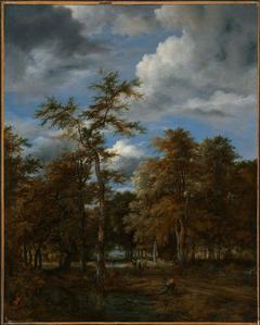 Woodland Vistas