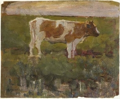 Brown and white heifer
